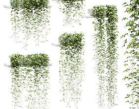Hanging ivy in pots on the shelves v2 - 5 models
