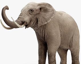 Rigged Elephant model 8K 3D asset