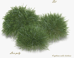 Bush Willow Salix rosmarinifolia 3D asset