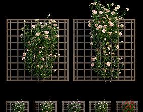 Plant rose set 17 3D