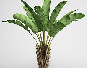 3D CGAxis Wild Banana Tree 08