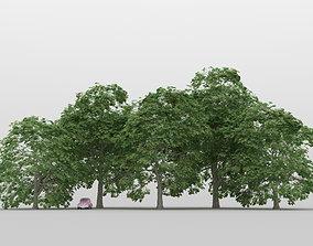 Chestnut Tree Pack 01 3D