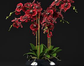 3D Orchid 12