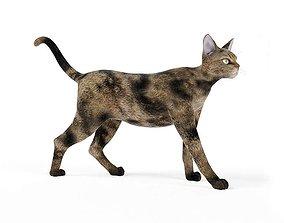 3D model Feline Spotted Cat