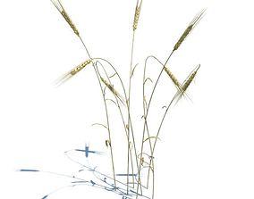 3D model Golden Brown Stalks Of Wheat