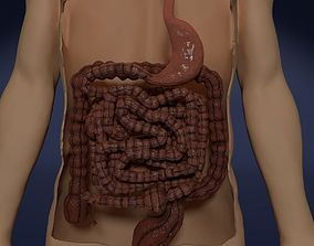 gastric 3D model INTESTINE ANIMATED PERISTALSIS