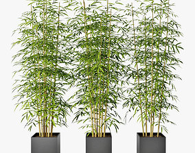 Bamboo 04 3D model