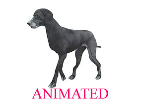 Walking cycle animated lowpoly Labrador Retriever 3D asset