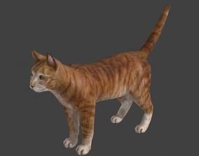3D pet Cat Model