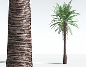 EVERYPlant Date Palm LowPoly 03 --10 Models-- low-poly
