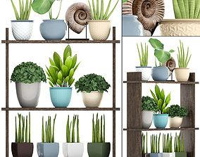 3D model Collection plants sansevieria