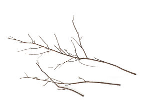 Branches 4 3D