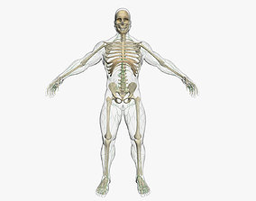 Lymphatic System with Skeleton 3DSmax human