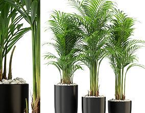 Plants collection 333 3D