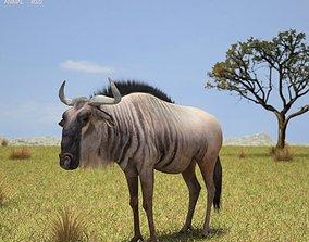 3D model Wildebeest Connochaetes