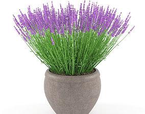design lavender 3D model