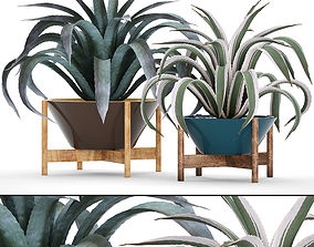 3D Agave collection 3