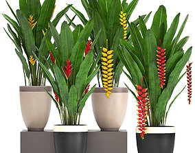 Collection Exotic plants Heliconia 3D model
