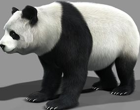 3D animated Panda A