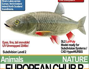 European Chub B 3D model