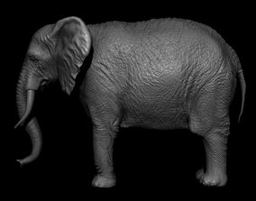 3D African elephant with tusks and wrinkles