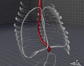 Esophagus Anatomy 3D model
