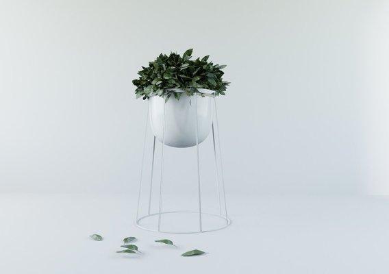 Flower ivy Pot