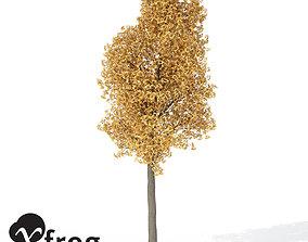 XfrogPlants Autumn Ginkgo 3D model