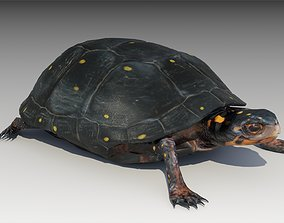 3D asset Spotted-turtle