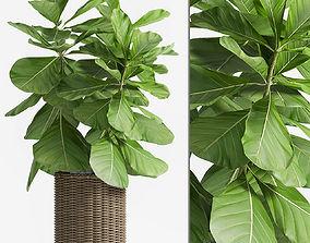 Decorative plant set-49 3D model