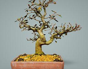 3D model game-ready Bonsai Tree