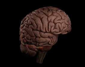 High Resolution 8k Human Brain System Pack 3D