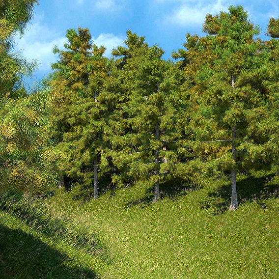 Cedar Tree Models Collection