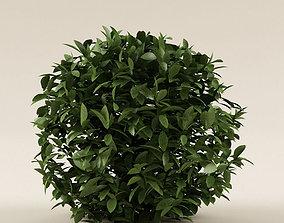 Bush 01 3D