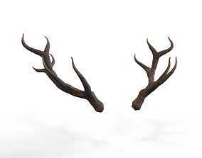 3D asset Deer Horns