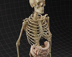 Anatomy intestine and complete skeleton 3D model