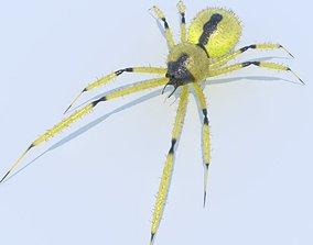 3D model PBR Spider Yellow sac