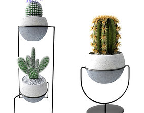 cactus collection 3D model PBR