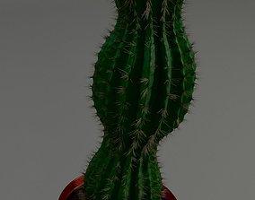 3D asset Cactus in a pot