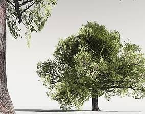 EVERYPlant English Oak LowPoly 19 -- 10 Models 3D asset