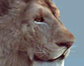 3D asset Lion realtime model