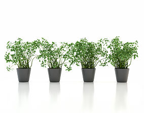 3D Parsley Pot Plant