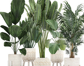 Houseplants in a white basket rattan for the 3D model 1