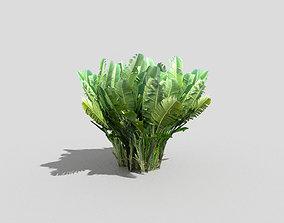 3D model banana plant 1