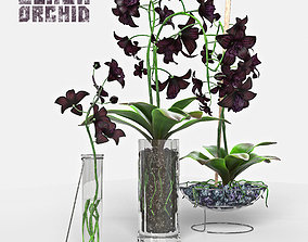 3D model Black Orchid set