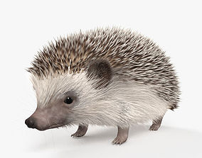 Hedgehog HD 3D model