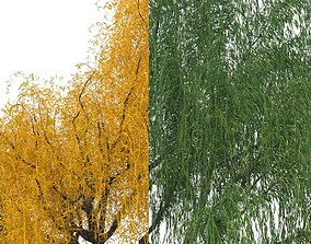 3D model willow trees