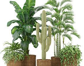 Plants collection 331 3D model