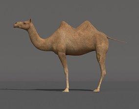 3D model rigged camel