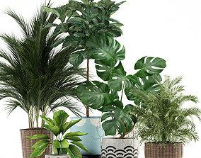 3D model Plants collection 115